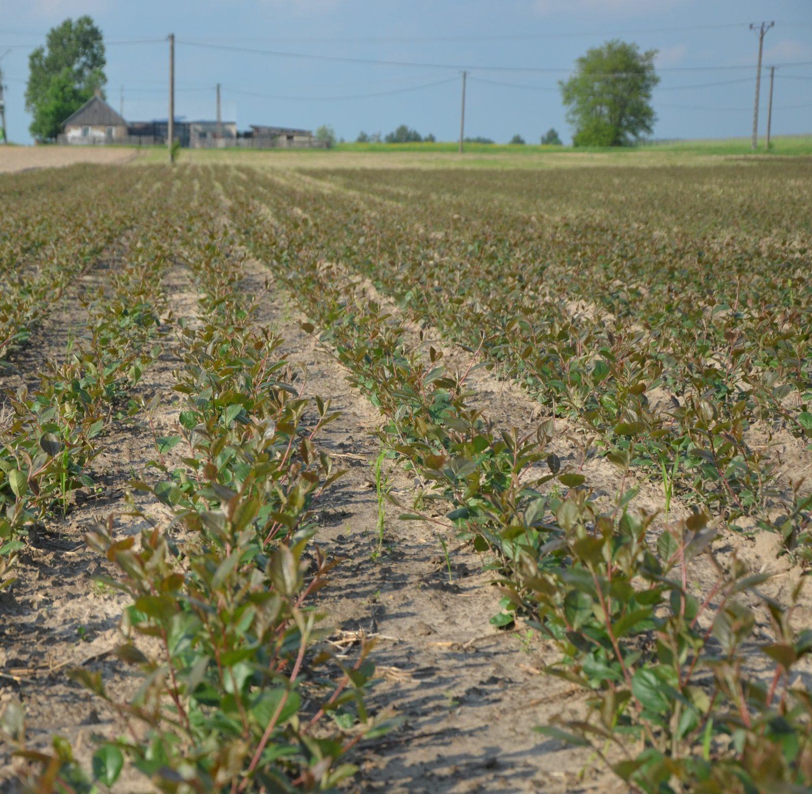 <h2>Rozpoczęcie produkcji sadzonek</h2>